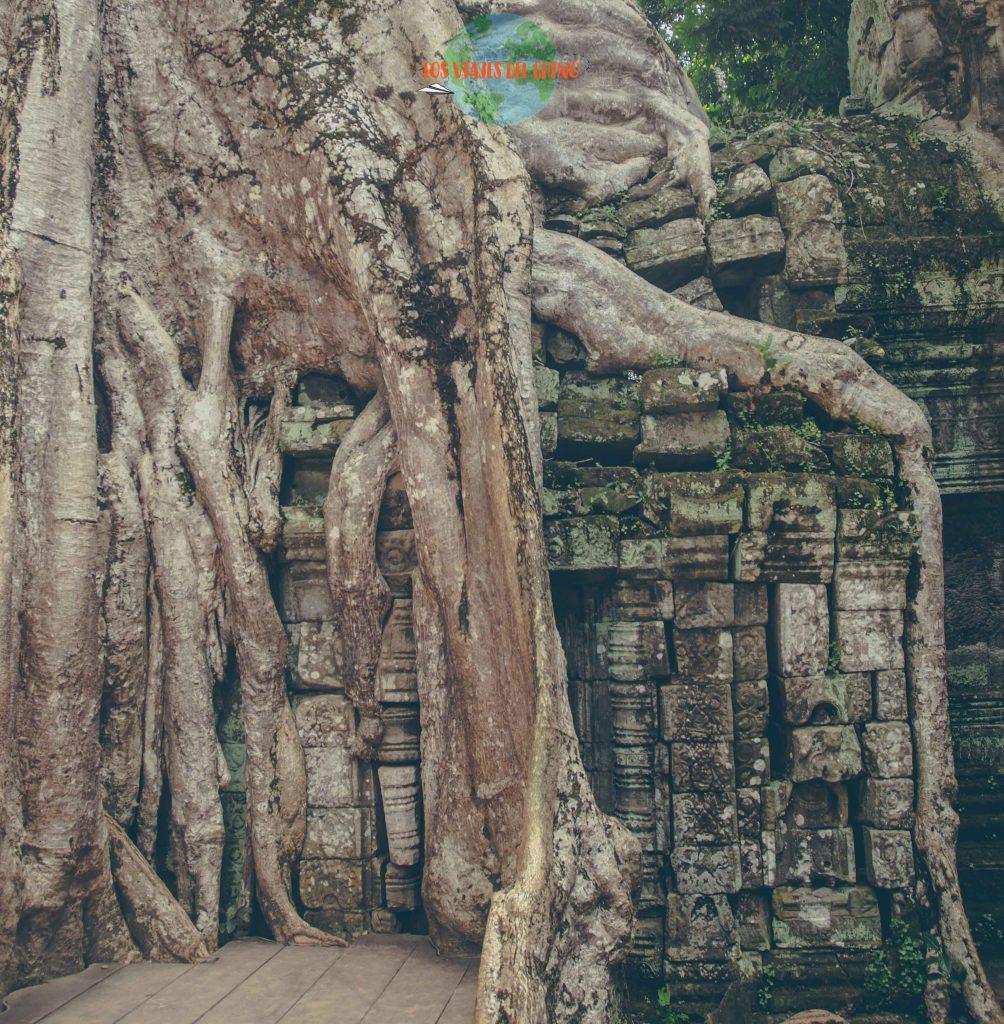 Árboles en Camboya